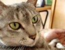 家猫日和 腕まくら