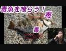 【野外飯】毒魚を喰らう!