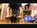 【検証】腹筋ローラーで何日で腹筋が割れるのか【31日目】