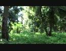 【踊ってみた】ゆるふわ樹海ガール