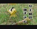 【アリの飼育記2冊目#10】女王蟻の捕まえ方【クロオオアリ結婚飛行】Flying ants day.