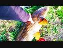 【釣り・Fishing】東京の浮間公園で鯉釣り、緋鯉を逃がす!@旧中川と荒川ロックゲート釣行、Freebuds3の開封等おまけ動画あり♪【VLOG・P30 Pro】