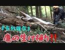 鹿の生け捕り&捕獲【稀少映像】