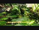【トロ船】滝のあるビオトープ2020.4~5【メダカ】