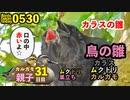 5月30日今日撮り野鳥動画まとめ カラスの雛!ムクドリ巣立ち、カルガモ親子31日目