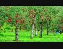 あかりんごの森