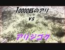10000匹のケアリと「アリジゴク」の語り継がれるべき戦いの結末!