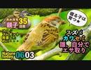 6月3日今日撮り野鳥動画まとめ スズメ雛、カワセミ雛、自力でご飯。カルガモ親子35日目