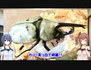 【CeVIO】グラントシロカブト紹介 修正版【蟲ラボ】