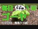 【毎日ゴーヤ】毎日58秒でゴーヤの成長をみる動画(40日目)