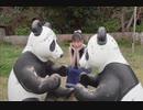 パンダさんと動物たちの戯れをただ眺めるだけの動画