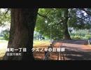 巨樹巡り~岩国市天然記念物 「楠一丁目のクスノキ巨樹群」の新緑