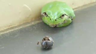 丸まったダンゴムシが食べられないカエル