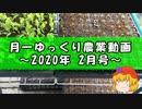 月一ゆっくり野菜栽培 2020年2月
