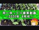月一ゆっくり野菜栽培 2020年4月