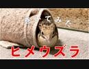 ヒメウズラ 巻いてみた!【I rolled a quail.】我卷了一只鹌鹑。