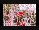 【東方自作アレンジ】春色小径