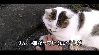【新型コロナ対策!】 3密の対策を行うネコ
