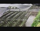 [旅行]大王わさび農場を見る30秒