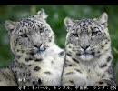 【ニコニコ動画】絶滅危惧種の動物達を解析してみた