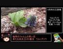 RTA(リアル登山アタック)外伝 6月の南八ツ花コンRTA