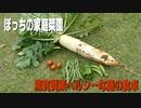 庭の野菜で清貧質素ヘルシーな食卓【キッチン・ガーデン #23】