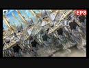【シンフォギアXD】EV101-S08「世界の命運を握る3人」聖なる誓いの合重奏