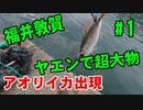 【#1 釣り動画】ヤエン釣りで大物のアオリイカがアジに食いつきました!引きがヤバイ!