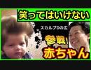 絶対に笑ってはいけない赤ちゃん人全員参戦ww【ガキの使い】【参戦シリーズ】【ツッコミ】