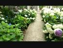 【旅行】#1 水戸市 保和苑~紫陽花づくし~前編