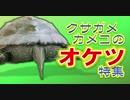 【クサガメカメコ】オケツ特集/亀のお尻好き集まれ!!カメコのお尻Only/Reeves turtle's bottom