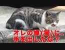 若い野良猫夫婦、間男猫の登場で昼ドラみたいになる