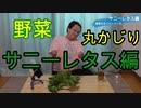 【野菜丸かじり企画】サニーレタス食べてみた!【いまさらトライチャンネル】#67