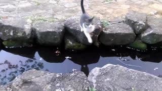 川を飛ぶネコ