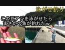 泳がせ釣り!開始1分でHIT!釣って食べる!