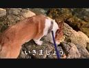 【ウェルシュ・コーギー桃太郎】桃太郎(替え歌)