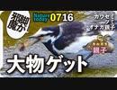 0716【ハクセキレイのアブ捕食】迷子のカルガモ親子、オナガ家族、猛禽類ツミ幼鳥、虫の幼虫など【今日撮り野鳥動画まとめ】身近な生き物語