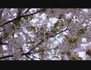 【Cover】卒業式【Rana、音街ウナ、初音ミク、GUMI】