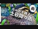 0718【土砂降りカルガモ親子】シジュウカラ鳴き声、オナガ巣材集め、カワセミ、ムクドリ家族。コウガイビルも。【今日撮り野鳥動画まとめ】身近な生き物語
