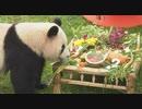 ジャイアントパンダが上海で豪華な食べ物で2歳の誕生日を祝う