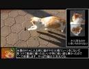 【RTA】 のらねこ物語 20.65