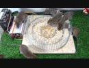 ホモと学ぶネズミトラップ.143000V