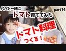 【恋バナ】パパと一緒にトマト育ててみた part14【料理】