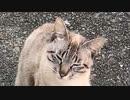 野良猫保護計画 2020-07-21