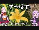 ざつぽた 第3夜 「富山・ニッコウキスゲと白木峰(しろきみね)」【ゆかついな車載】
