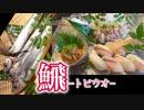 【握ってみた】寿司職人によるトビウオの握り寿司とたたきとごま醤油和えの作り方