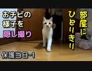 家猫になって初ごはん、初ちゅーる【野良猫の保護当日1】