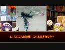 【講座動画投稿祭2020夏】 ゆっくりどうぶつずかん番外編1後編【夏の毒生物】
