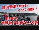 【豊浜漁港】あの噂のイワシが爆釣な漁港に釣りに行ってきました!イワシの大群襲来!朝5時で場所取り出来ず!