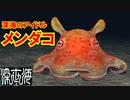【メンダコ】深海のスーパーアイドルと、深海に横たわる見えない壁【深世海】part5